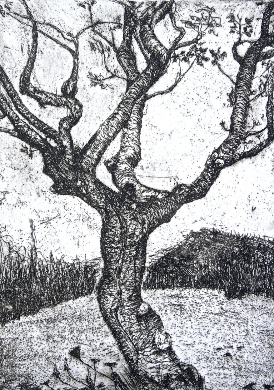 RURAL MENU, Portrait of Trees